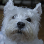 Rosie the camp dog